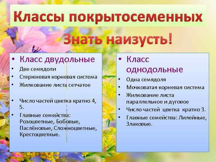 Классы покрытосеменных Знать наизусть! • Класс двудольные • Две семядоли • Стержневая корневая система
