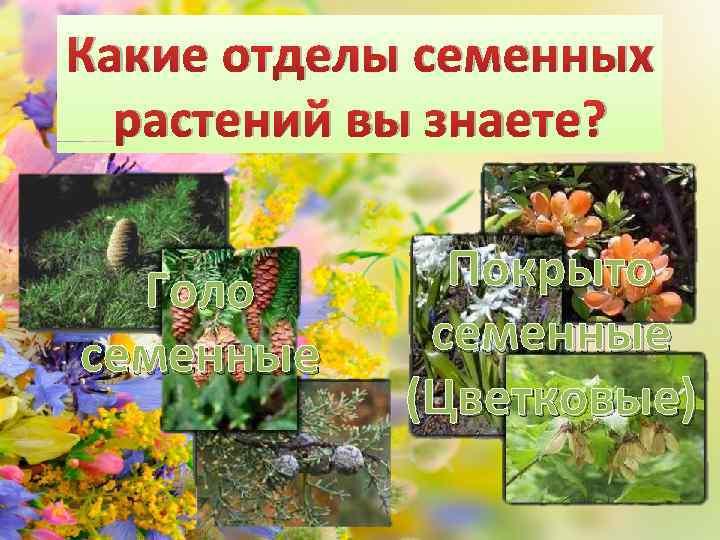 Какие отделы семенных растений вы знаете? Голо семенные Покрыто семенные (Цветковые)
