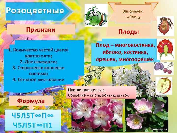 Розоцветные Заполняем таблицу Признаки Плоды 1. Количество частей цветка кратно пяти; 2. Две семядоли;