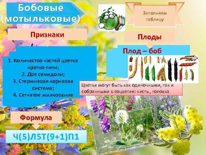 Бобовые (мотыльковые) Признаки Заполняем таблицу Плоды Плод – боб 1. Количество частей цветка кратно