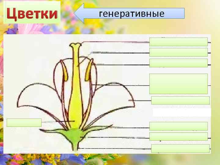 Цветки генеративные