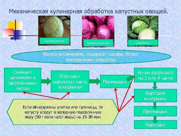 Механическая кулинарная обработка капустных овощей. Белокочанная Краснокочанная Савойская Богата витаминами, содержат сахара, белки, минеральные