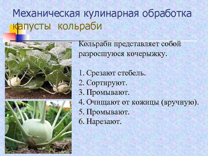 Механическая кулинарная обработка капусты кольраби Кольраби представляет собой разросшуюся кочерыжку. 1. Срезают стебель. 2.