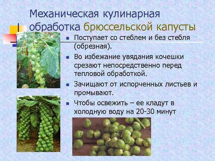 Механическая кулинарная обработка брюссельской капусты n n Поступает со стеблем и без стебля (обрезная).