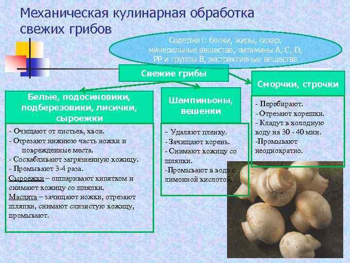 Механическая кулинарная обработка свежих грибов Содержат: белки, жиры, сахар, минеральные вещества, витамины А, С,