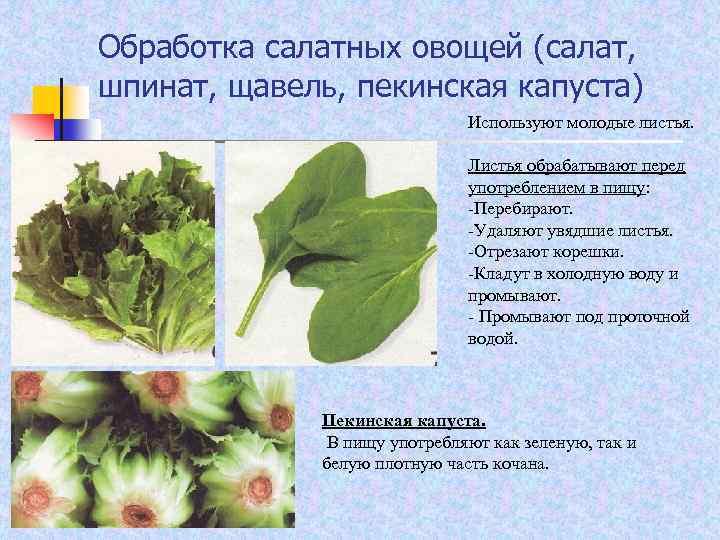 Обработка салатных овощей (салат, шпинат, щавель, пекинская капуста) Используют молодые листья. Листья обрабатывают перед