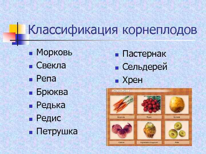 Классификация корнеплодов n n n n Морковь Свекла Репа Брюква Редька Редис Петрушка n
