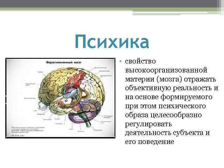 Психика • свойство высокоорганизованной материи (мозга) отражать объективную реальность и на основе формируемого при