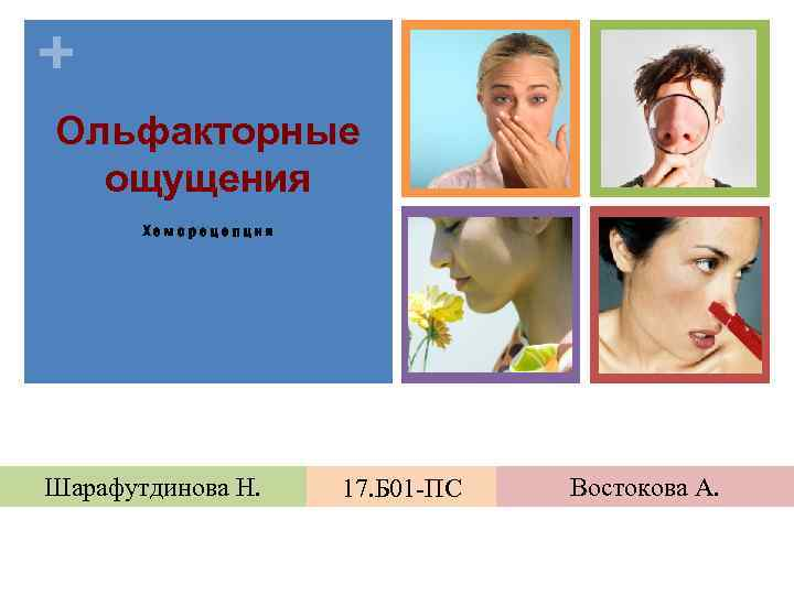 + Ольфакторные ощущения Хеморецепция Шарафутдинова Н. 17. Б 01 -ПС Востокова А.