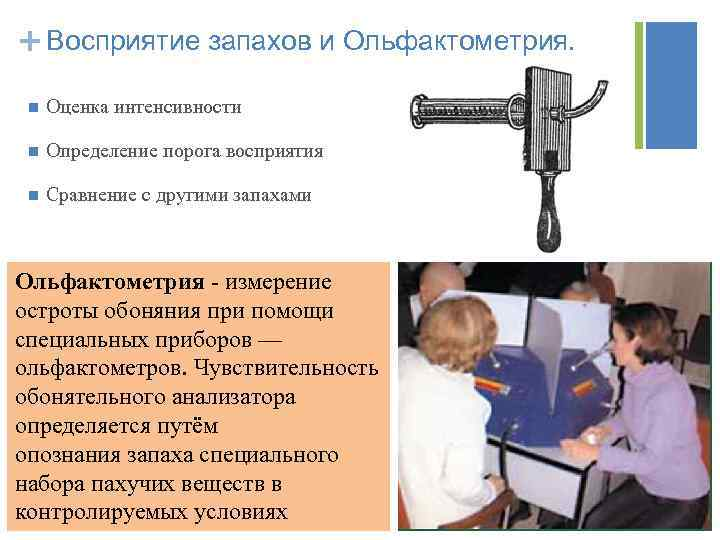 + Восприятие запахов и Ольфактометрия. n Оценка интенсивности n Определение порога восприятия n Сравнение
