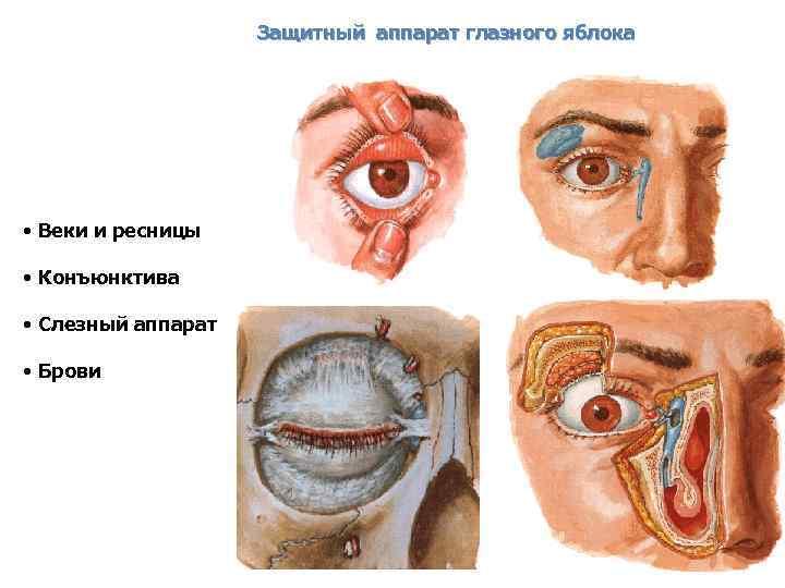 Схемы глазного аппарата