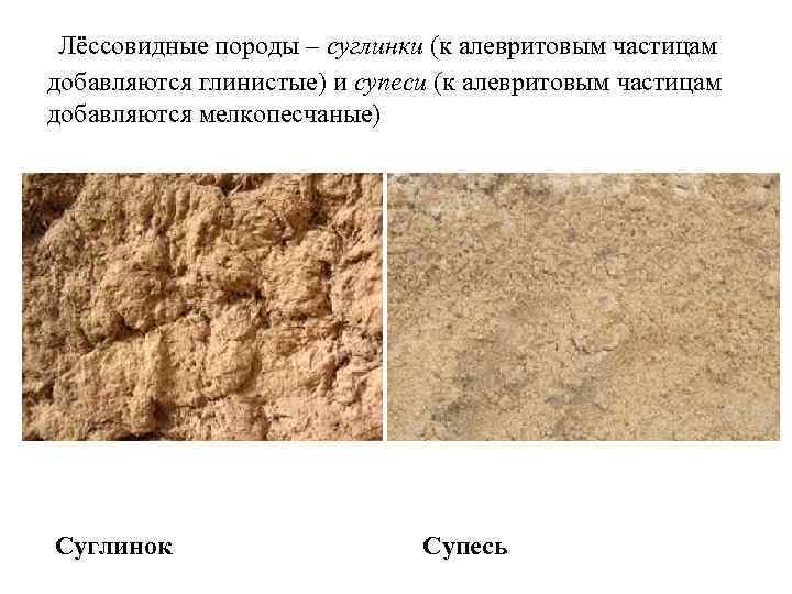 Лёссовидные породы – суглинки (к алевритовым частицам добавляются глинистые) и супеси (к алевритовым частицам