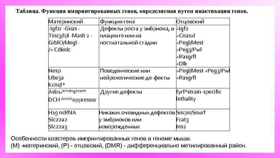 Таблица. Функция импринтированных генов, определяемая путем инактивации генов. Материнский Igf 2 r Gnas Tssc
