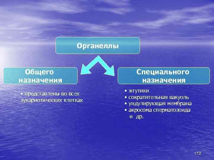 Органеллы Общего назначения • представлены во всех эукариотических клетках Специального назначения • • жгутики