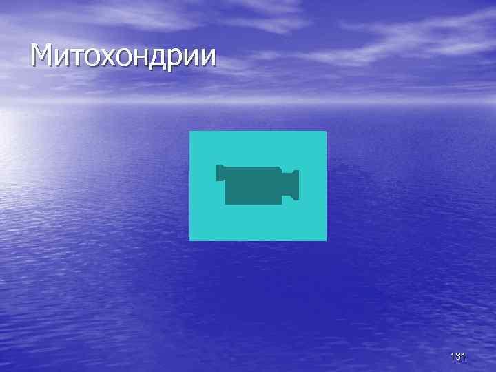 Митохондрии 131
