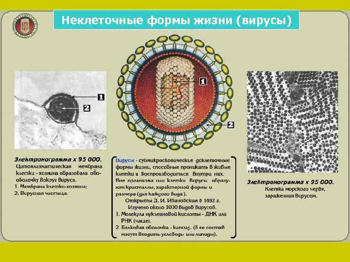 Неклеточные формы жизни (вирусы)