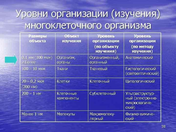Уровни организации (изучения) многоклеточного организма Размеры объекта Объект изучения Уровень организации (по объекту изучения)