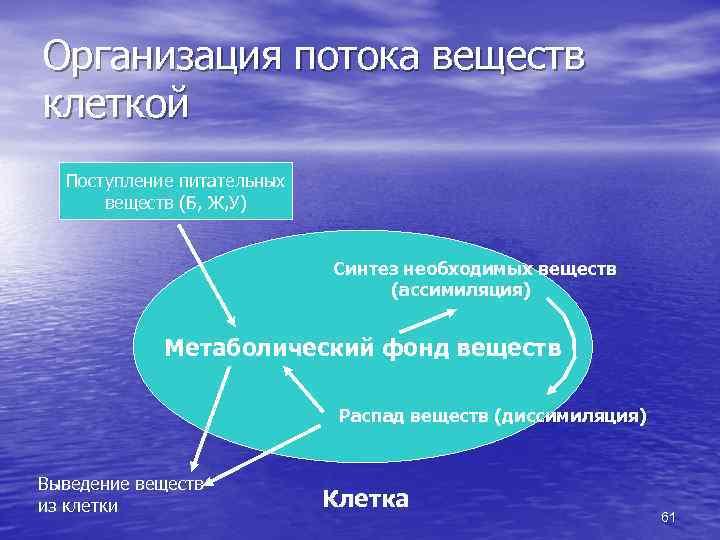 Организация потока веществ клеткой Поступление питательных веществ (Б, Ж, У) Синтез необходимых веществ (ассимиляция)