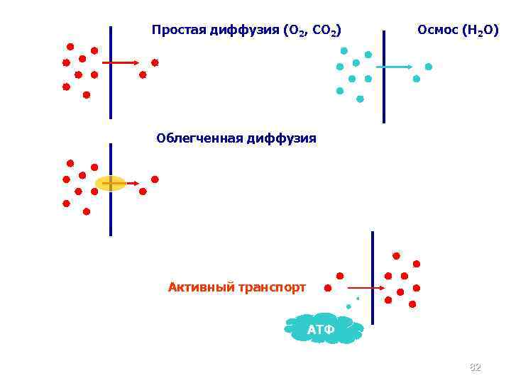Простая диффузия (О 2, СО 2) Осмос (Н 2 О) Облегченная диффузия Активный транспорт