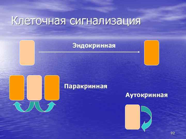 Клеточная сигнализация Эндокринная Паракринная Аутокринная 92