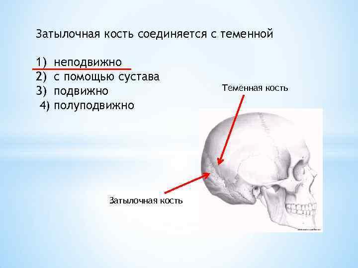 С помощью сустава соединяются в п гоч рунные коды здоровый позвоночник и суставы