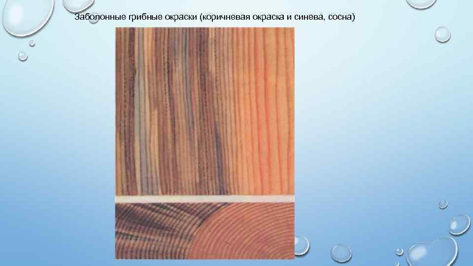 пороки древесины сосны