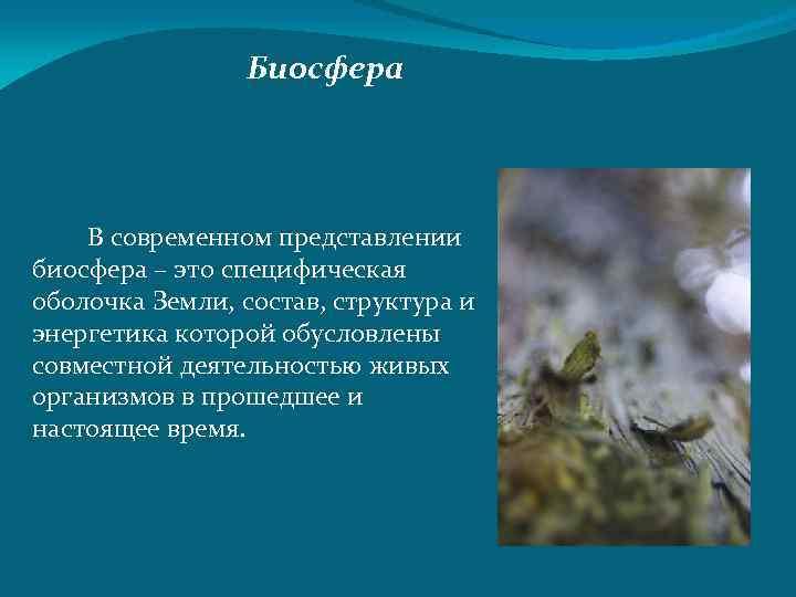 Биосфера В современном представлении биосфера – это специфическая оболочка Земли, состав, структура и энергетика