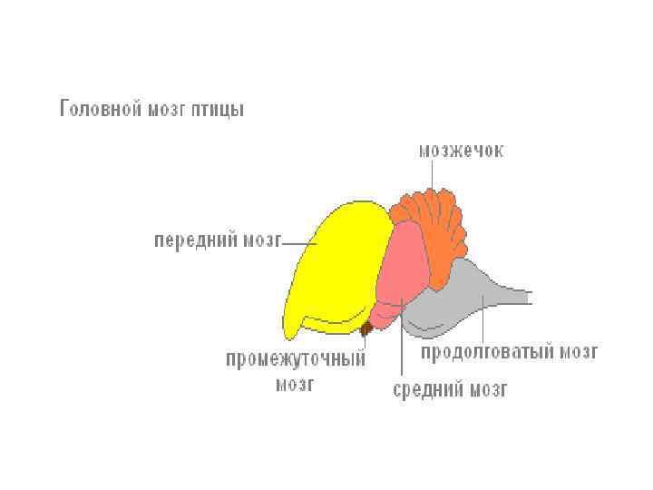 феи картинка мозга птиц вот