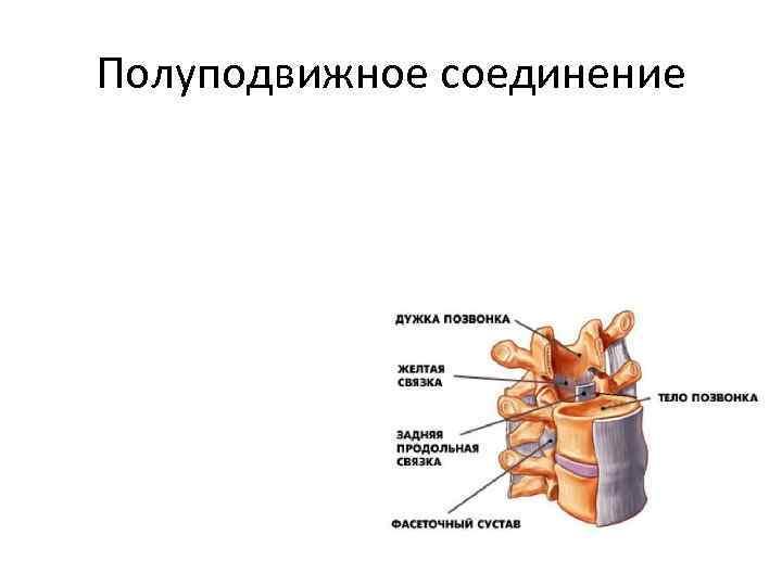 Полуподвижное соединение