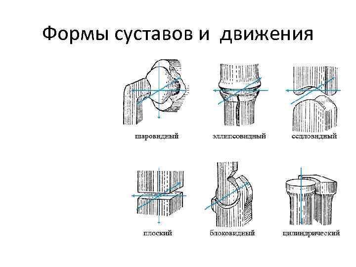 Формы суставов и движения