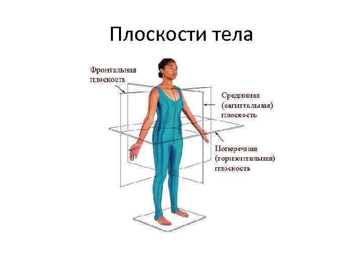 Плоскости тела