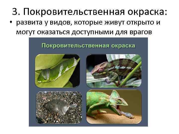 3. Покровительственная окраска: • развита у видов, которые живут открыто и могут оказаться доступными