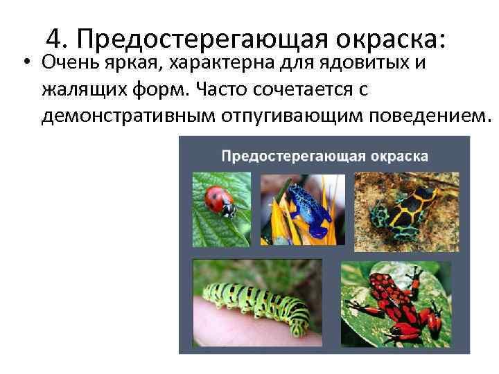 4. Предостерегающая окраска: • Очень яркая, характерна для ядовитых и жалящих форм. Часто сочетается