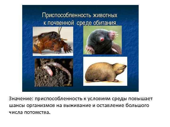 Значение: приспособленность к условиям среды повышает шансы организмов на выживание и оставление большого числа