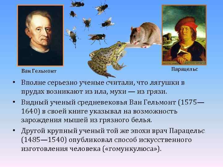 Ван Гельмонт Парацельс • Вполне серьезно ученые считали, что лягушки в прудах возникают из