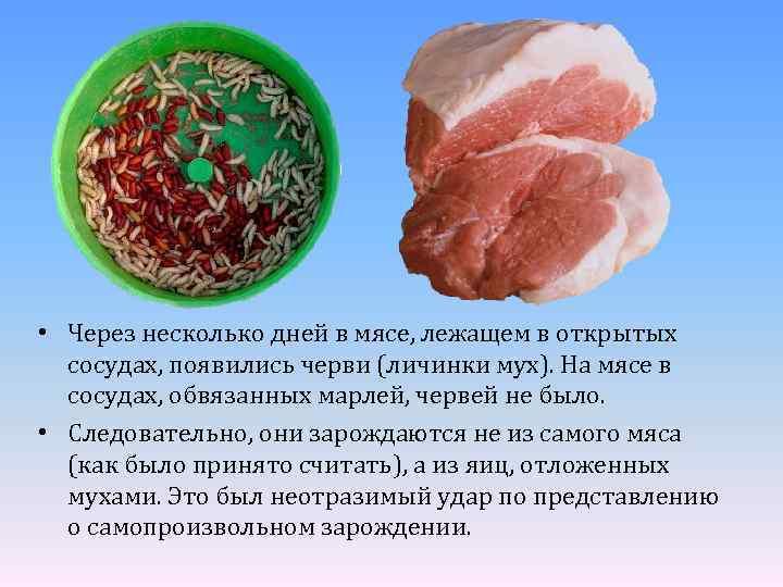 • Через несколько дней в мясе, лежащем в открытых сосудах, появились черви (личинки
