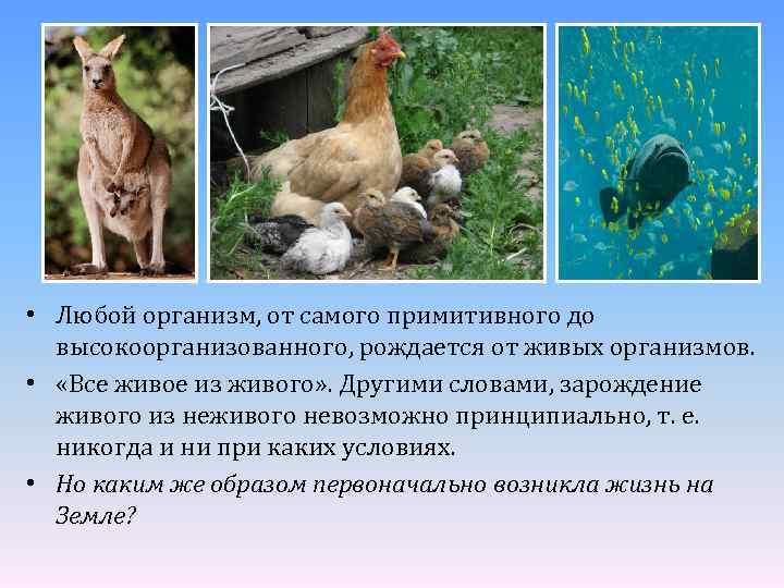 • Любой организм, от самого примитивного до высокоорганизованного, рождается от живых организмов. •