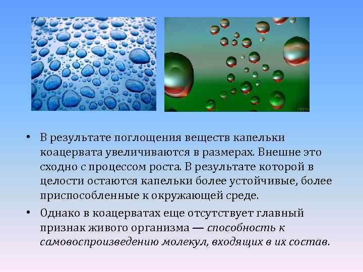 • В результате поглощения веществ капельки коацервата увеличиваются в размерах. Внешне это сходно