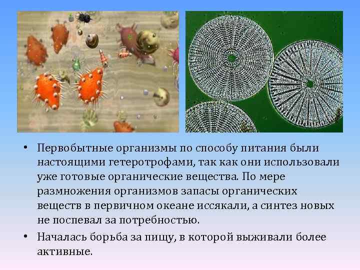• Первобытные организмы по способу питания были настоящими гетеротрофами, так как они использовали