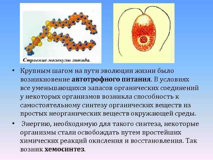 • Крупным шагом на пути эволюции жизни было возникновение автотрофного питания. В условиях