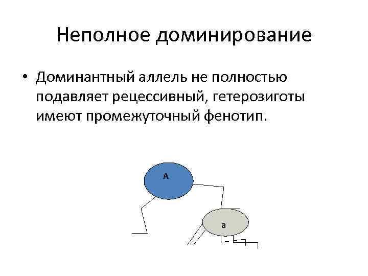 Неполное доминирование • Доминантный аллель не полностью подавляет рецессивный, гетерозиготы имеют промежуточный фенотип. А