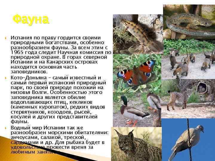 Фауна Испания по праву гордится своими природными богатствами, особенно разнообразием фауны. За всем этим