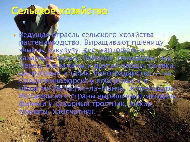 Сельское хозяйство Ведущая отрасль сельского хозяйства — растениеводство. Выращивают пшеницу ячмень, кукурузу, рис, картофель