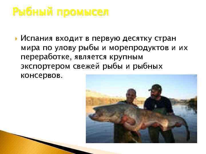 Рыбный промысел Испания входит в первую десятку стран мира по улову рыбы и морепродуктов