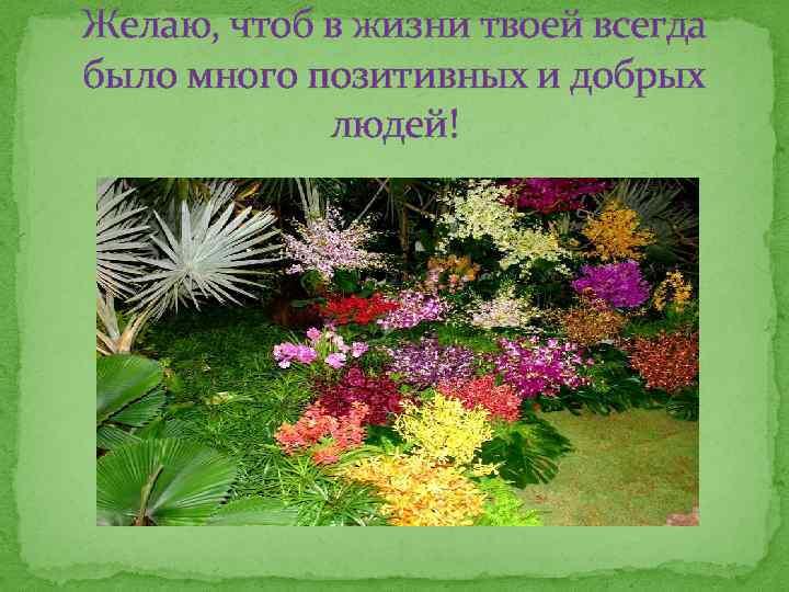 Желаю, чтоб в жизни твоей всегда было много позитивных и добрых людей!