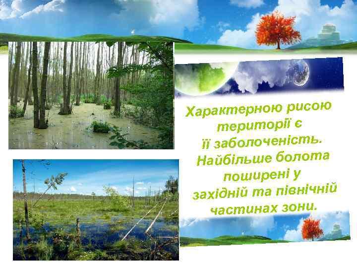 Характерною рисою території є її заболоченість. Найбільше болота поширені у західній та північній частинах