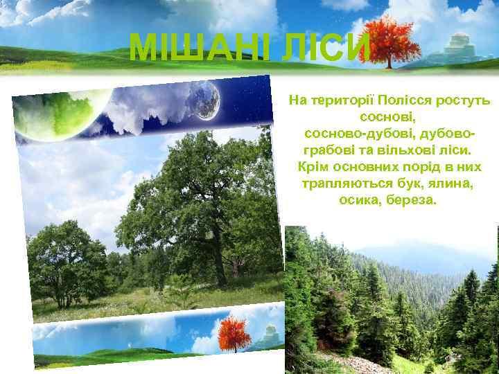 МІШАНІ ЛІСИ На території Полісся ростуть соснові, сосново-дубові, дубовограбові та вільхові ліси. Крім основних