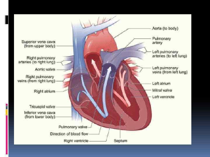 Хроническая сердечная недостаточность терапия лекция