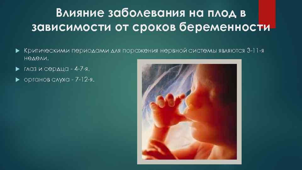 Влияние заболевания на плод в зависимости от сроков беременности Критическими периодами для поражения нервной