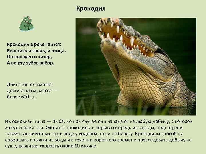 Крокодил в реке таится: Берегись и зверь, и птица. Он коварен и хитёр, А